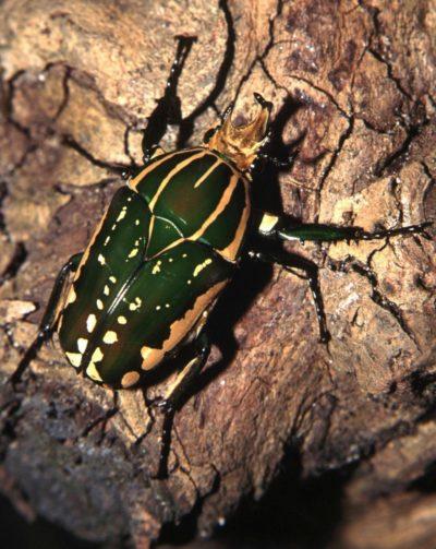 L'univers fascinant des insectes