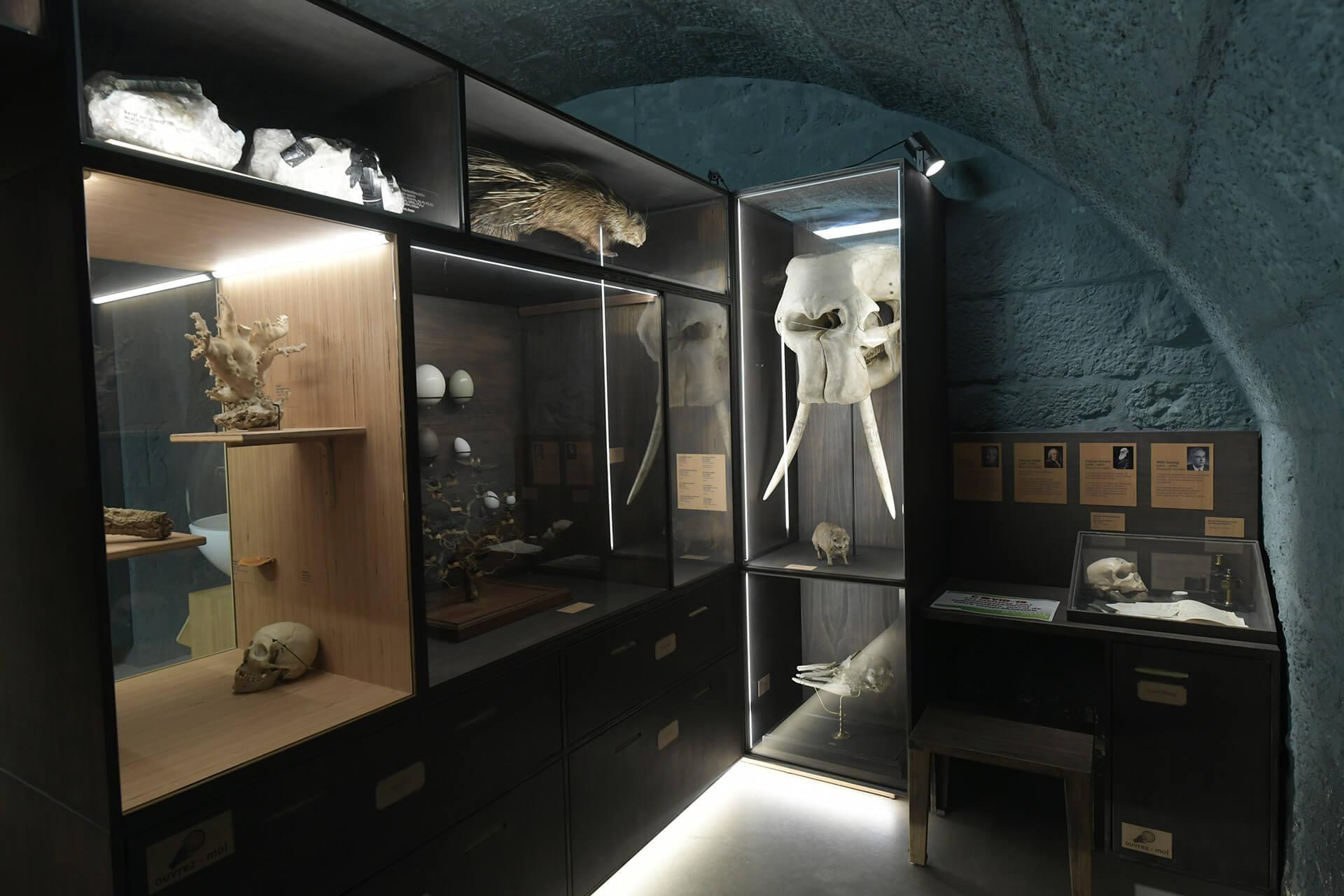 Les collections du Muséum d'histoire naturelle