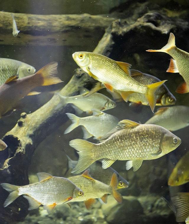 Photo d'une partie de l'Aquarium du Muséum