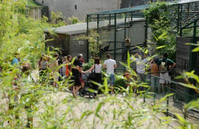 Découverte du Jardin  zoologique