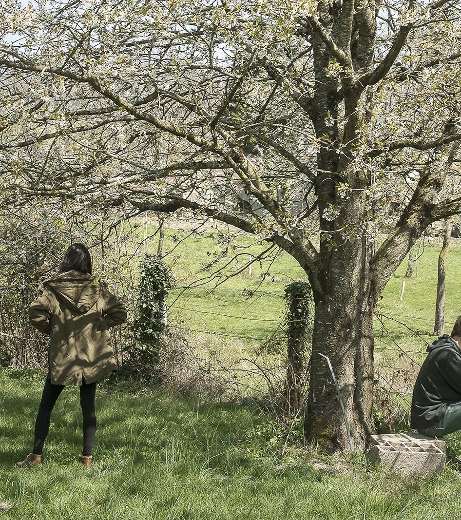 """l'exposition """"Canti. Vie remarquable des arbres et vie quotidienne"""""""