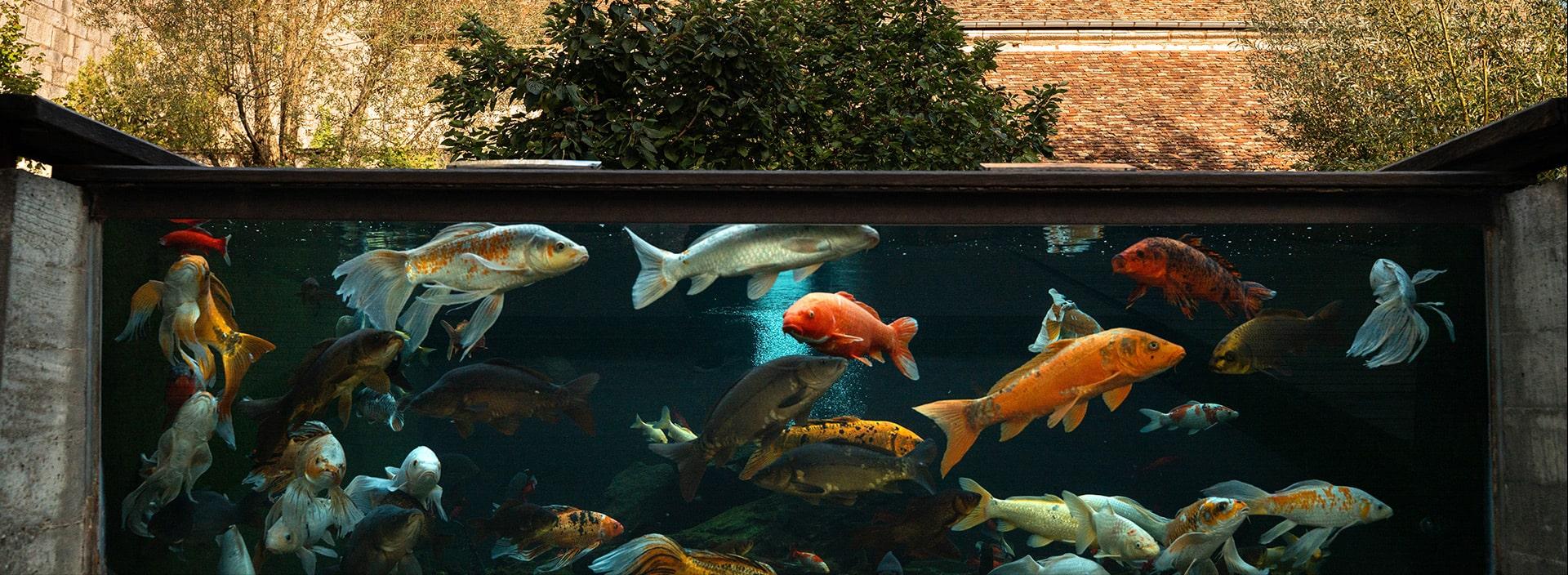 Les espaces animaliers
