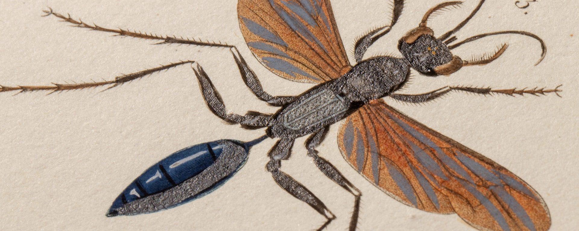 illustration Un Muséum atypique