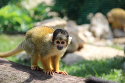 Visite du jardin zoologique